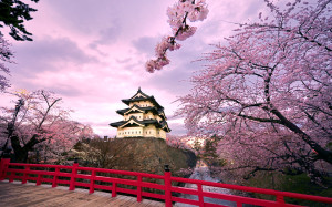 ????? (Hirosaki Castle and cherry blossoms)